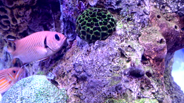 colorful tropical fish - tropical fish stock videos and b-roll footage