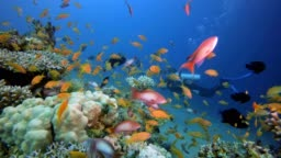 Colorful Underwater Seascape and Diver