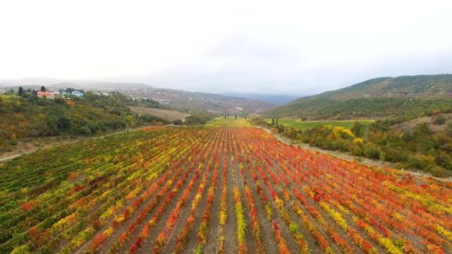 vídeos y material grabado en eventos de stock de antena: viñedos coloridos en otoño - multicóptero