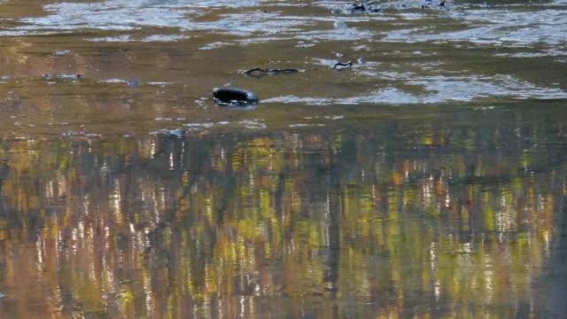 colorful water reflections and flowing creek, autumn color, texas hill country, lost maples state natural area, texas - naturligt landmärke bildbanksvideor och videomaterial från bakom kulisserna