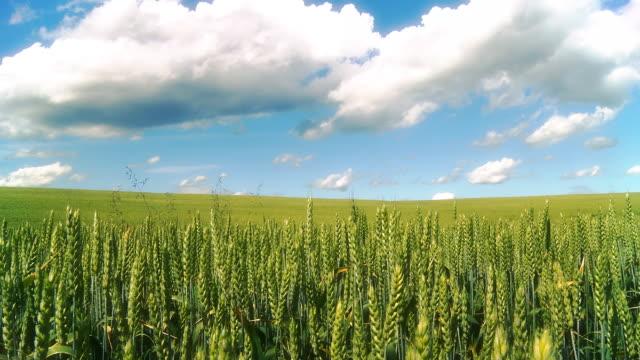 HD CRANE: Bunte Wheat Field