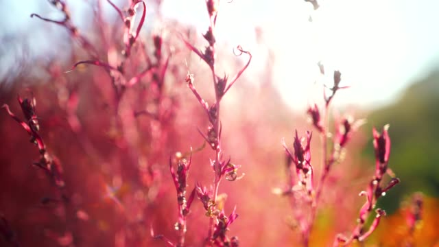 colors of autumn. close-up focus concept 4k resolution. - november stock videos & royalty-free footage