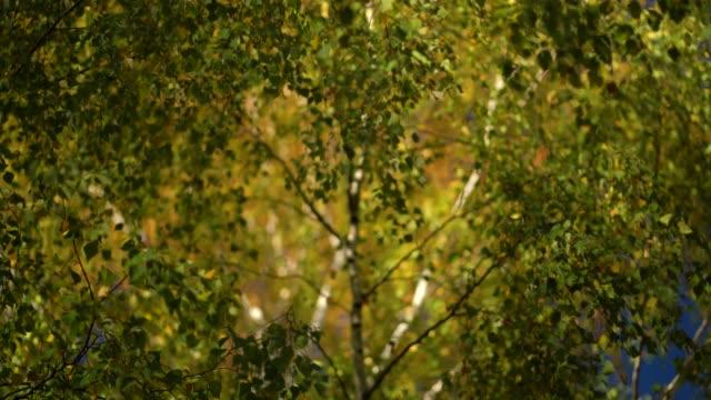 vidéos et rushes de couleurs d'automne. résolution de close-up focus concept 4k. - branche partie d'une plante
