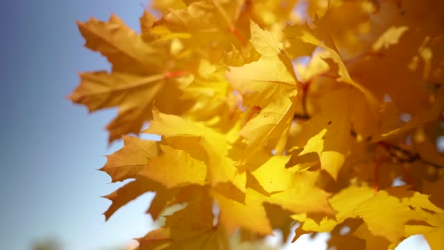 colors of autumn. close-up focus concept 4k resolution. - season stock videos & royalty-free footage