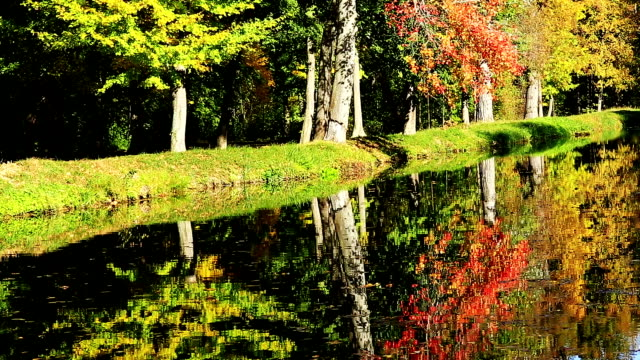 colors of autumn - deciduous stock videos & royalty-free footage