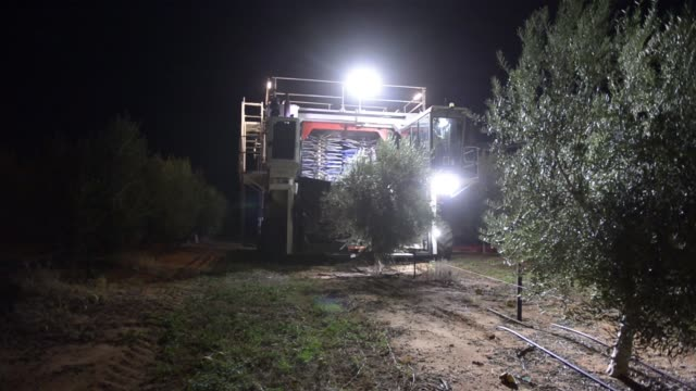 A Colossus harvester harvests olives from olive trees at a Boundary Bend Ltd olive grove at night in Boundary Bend Australia on Wednesday Mar 16 2016