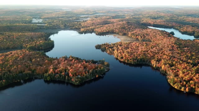 colourful autumn forest and blue lake, aerial top drone view - ontario canada stock videos & royalty-free footage