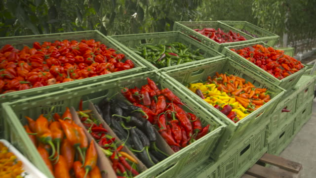 colourful display of ripe chillies, uk - season stock videos & royalty-free footage