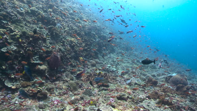 colourful fish swim over reef, bali. - multi coloured stock videos & royalty-free footage