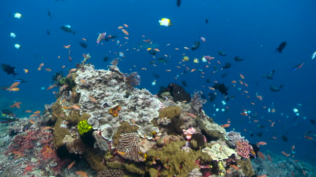 colourful fish swim over reef, bali. - salt water fish stock videos & royalty-free footage