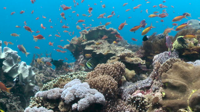 colourful fish swim over reef, bali. - reef stock videos & royalty-free footage