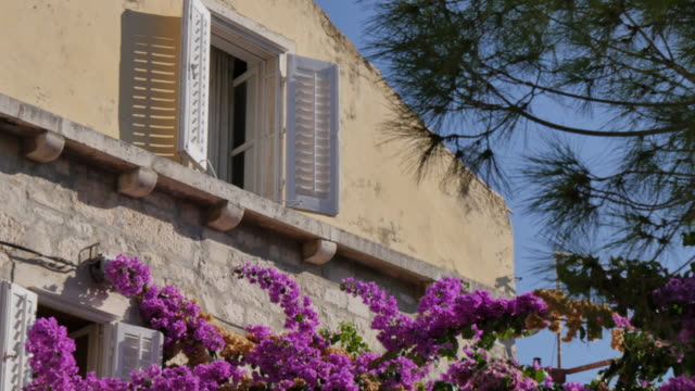 colourful flowers and shuttered window in korcula town, korcula island, dalmatia, croatia, europe - shutter stock videos & royalty-free footage
