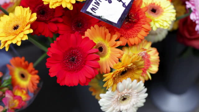 Colourful Gerbera flowers
