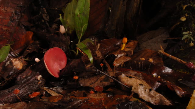 colourful mushrooms grow in a forest. available in hd. - woodland stock videos & royalty-free footage