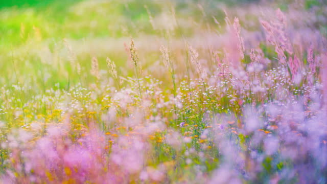 colourfull flowering field - pastel colored stock videos & royalty-free footage