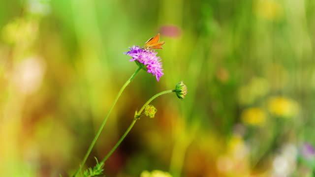 Farbigen Blüte Feld