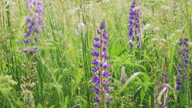 colourfull flowering field - wildflower stock videos and b-roll footage
