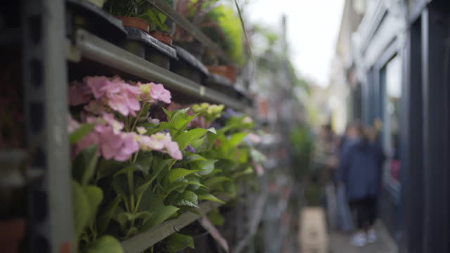 columbia road flower market, london, uk - east london stock videos and b-roll footage