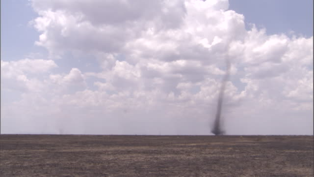 column of dust devil swirls over savanna. available in hd. - natural column stock videos and b-roll footage