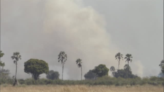 a column of smoke rises from a fire on the okavango delta. available in hd. - natural column stock videos and b-roll footage