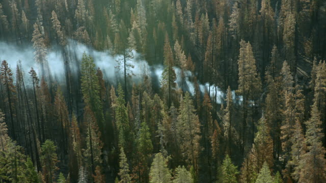 A column of smoke rises through the trees in Lassen National Forest.
