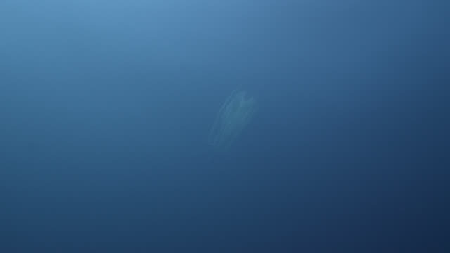 comb jelly drifts in blue ocean, azores - one animal stock videos & royalty-free footage