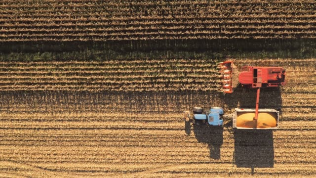 aerial combine and tractor harvesting corn crops - combine harvester stock videos & royalty-free footage