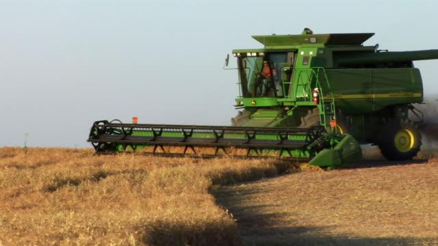 vidéos et rushes de a combine cuts wheat in a field. - dakota du nord