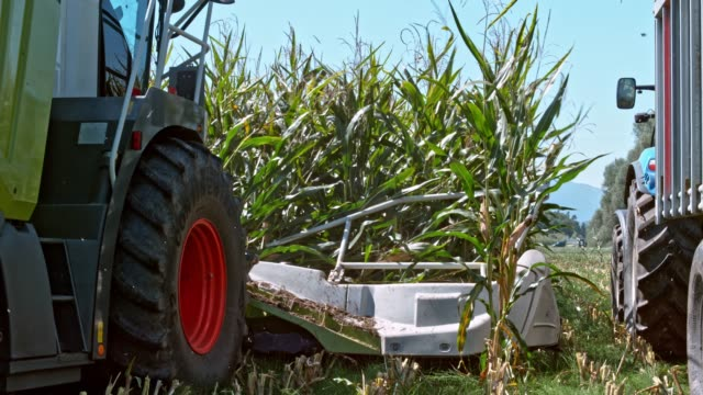 slo mo combine cutter bar reaping corn - agricultural machinery stock videos & royalty-free footage