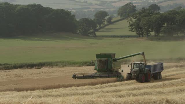 Combine deposits wheat (Triticum aestivum) into trailer, Somerset, England