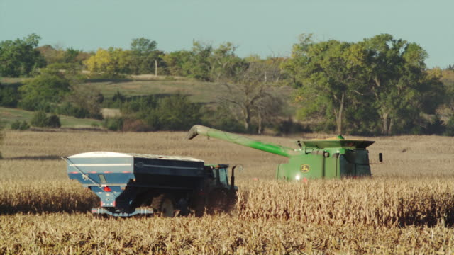 a combine full of harvested corn drives away from camera and unloads the crop into a wagon. - nebraska stock-videos und b-roll-filmmaterial