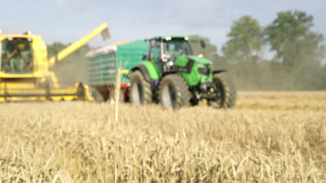 ls combine harvester and tractor harvesting wheat in the field - ear of wheat stock videos and b-roll footage