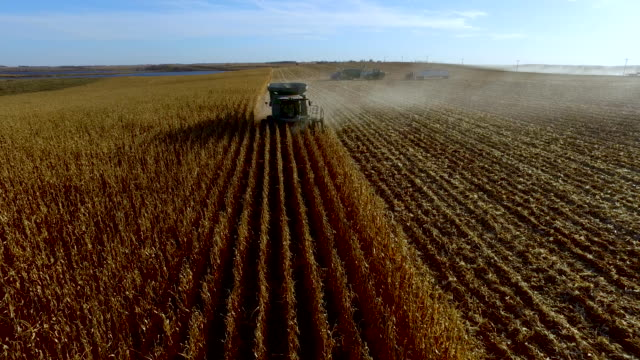combine harvester approaching and passing with top down view - corn cob stock videos & royalty-free footage