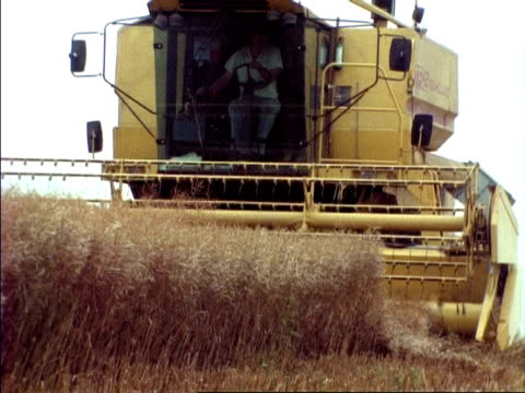 vidéos et rushes de combine harvester, cuts oil seed rape crop, cu, england - crucifers
