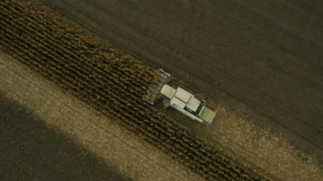AERIAL Combine Harvester Cutting Corn