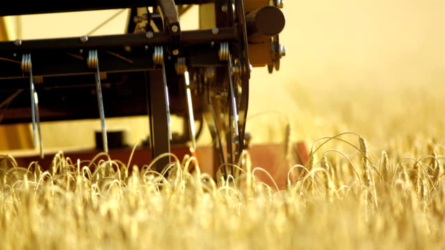combine harvester cutting crops - machinery stock videos & royalty-free footage