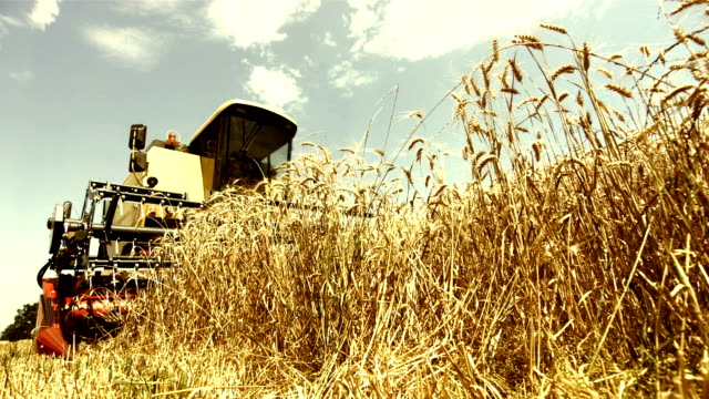 Combine Harvester Cutting Crops