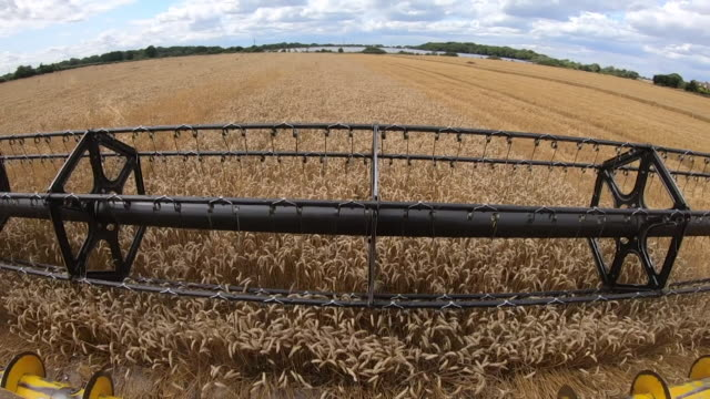 pov of combine harvester cutting down wheat - field stock videos & royalty-free footage