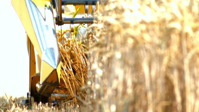 収穫機切断小麦を組み合わせる - 露出過度点の映像素材/bロール