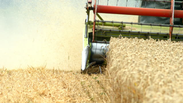 combine harvester cutting wheat - stubble stock videos & royalty-free footage