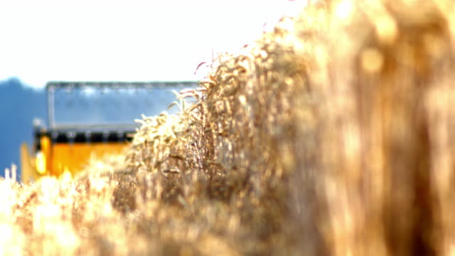 stockvideo's en b-roll-footage met combineer harvester cutting tarwe - differential focus