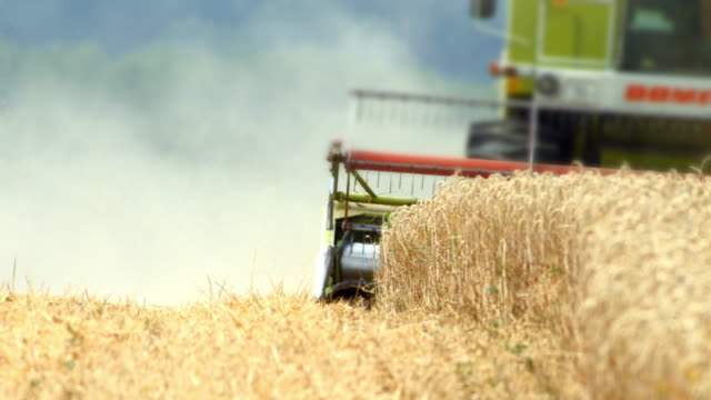 combine harvester cutting wheat - harvesting stock videos & royalty-free footage