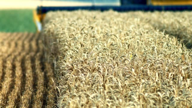 combine harvester cutting wheat - combine harvester stock videos & royalty-free footage