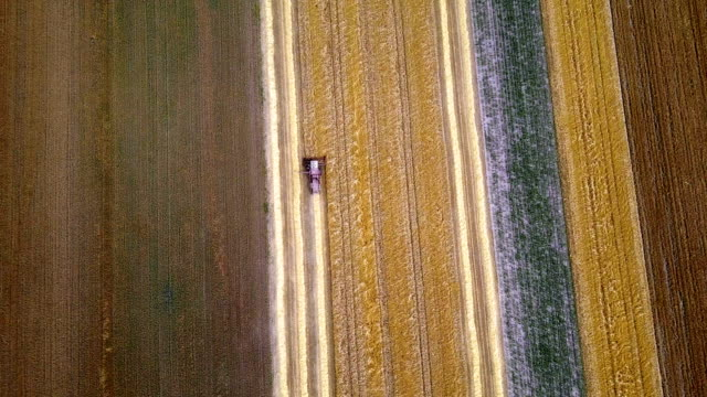 Combine harvester drawing lines in the wheat fields