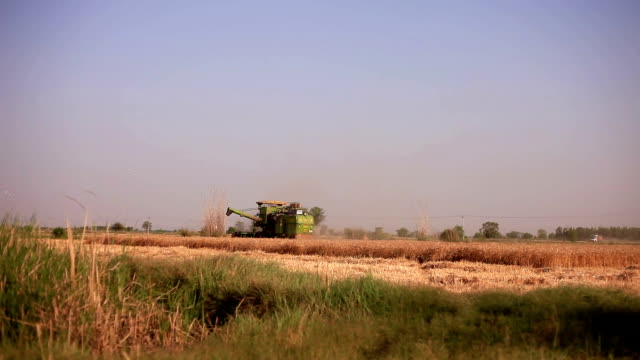 combine harvester during wheat harvesting - agricultural machinery stock videos and b-roll footage
