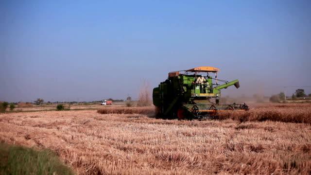 vídeos y material grabado en eventos de stock de cosechadora en cosecha de trigo - actividad de agricultura