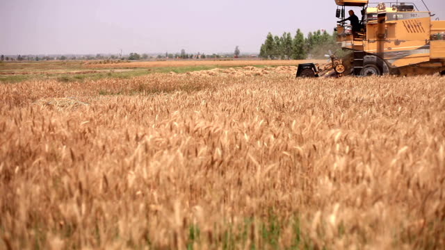 combine harvester during wheat harvesting - farm worker stock videos and b-roll footage