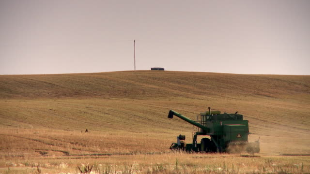 A combine harvester harvest wheat in the field