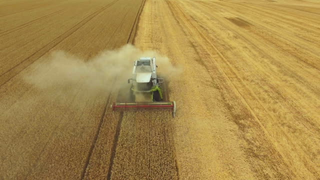 combine harvester harvesting a wheat field during a very dry summer season - aerial view. combine harvesting a wheat field during a very dry summer season - aerial view. mehdrescher bei der ernte ein weizenfeld - combine harvester stock videos & royalty-free footage