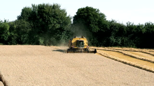 Combine harvester harvesting in European field   FO